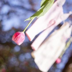 Glauchau, Babybauch, InLove, Babgallerie, Schwangerschaft, Fotos, Fotograf, Frühling, Blütenzeit, Tulpe